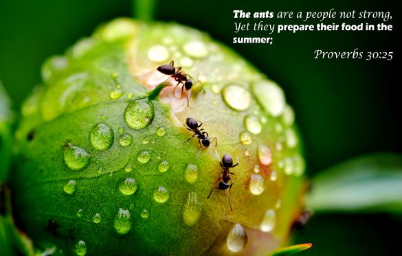 proverbs_30_25