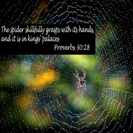 proverbs_30_28